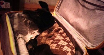 He takes their dog to the hospital hidden in a suitcase so his sick wife can hug their dog for the last time!