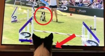 Un cane guarda il video di SE STESSO mentre vince una gara: la reazione vi farà piegare in due dalle risate