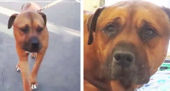 Deze hond is zojuist door zijn baasjes achtergelaten in een asiel je leest het verdriet in zijn ogen
