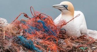 10 einfache alltägliche Aktionen die die Umwelt vor der Zerstörung retten können