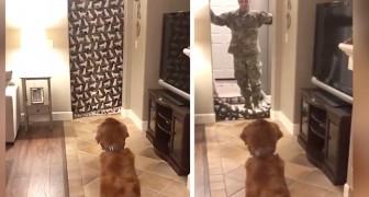 Il soldato torna  a casa e fa una sorpresa al cane: lo scherzo finisce nel più dolce dei modi