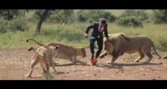 Un partido de fútbol con los leones? Increible pero es verdad!
