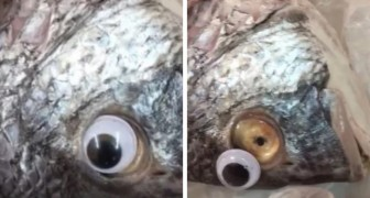 Unmasked a fishmonger that applied fake eyes on fish to make them appear fresher