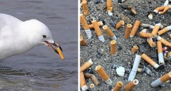 Zigarettenkippen sind die am häufigsten gefundenen Müllteile in den Ozeanen