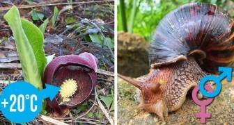 Die Natur hört nie auf uns zu erstaunen: Hier sind 10 kuriose Fakten, die nur wenige kennen