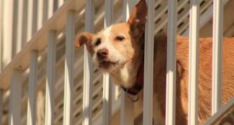 Cani costretti sul balcone: a Verona entreranno in vigore le sanzioni per i proprietari