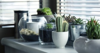 Las 3 plantas que segun la tradicion china cada uno de nosotros deberia tener dentro de la casa