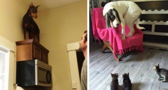 10 funny images of dogs terrified by something RIDICULOUS!