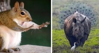 Le 15 foto di animali più esilaranti del 2018: ecco a voi il lato più buffo della natura