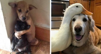 16 photos of animal friendships: so curious and strange as to seem unreal