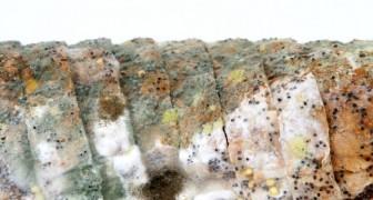 È sicuro mangiare la parte 'Pulita' del pane ammuffito?
