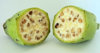 Voici l'aspect bizarre de certains fruits avant d'être domestiqués par l'homme