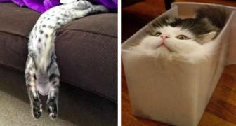Ces 20 photos amusantes montrent que les chats sont faits de matière liquide.