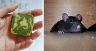 Keeping mice away from your home without using dangerous chemicals