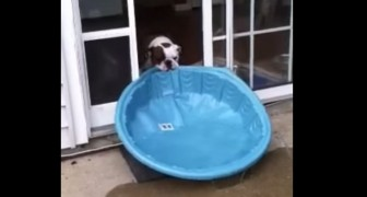 Dog wants the swimming pool in the house !!