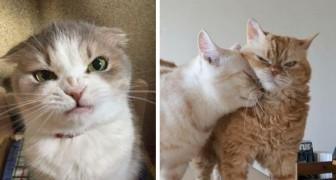 25 humeurige katten die je zou willen opvreten