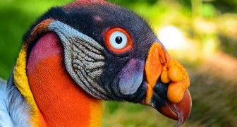 10 vogels die van een andere planeet lijken te komen maar die wel echt bestaan