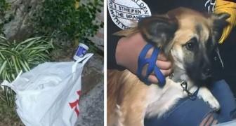 Ein Hund findet eine Tüte und zieht die Aufmerksamkeit seiner Besitzer auf sich: Auf diese Weise rettet er ein unschuldiges Leben.