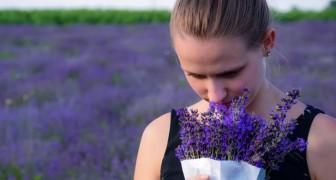 Lavendel ist das Parfum, das Angst löst: Japanische Forscher entdecken es.