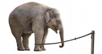 La storia della corda e dell'elefante, che ci ricorda quanto la paura di fallire ci paralizza