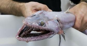 Wissenschaftler zeigen 11 sehr seltene australische Tiere.... die aus einem Alptraum herausgekommen zu sein scheinen....