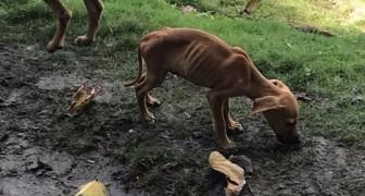 Pendant ses vacances, elle voit un chiot avec la peau sur les os : voici ce qu'elle fait pour le sauver