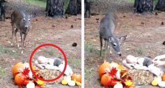 Estan haciendo las fotos al neonato cerca del bosque...pero cuando llega un ciervo sucede algo de magico