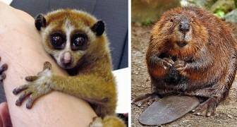 15 Tierarten, die sehr zart erscheinen.... aber eigentlich extrem gefährlich sind.