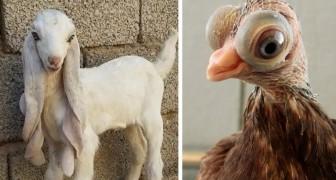 20 Fotos von Tieren, von denen man nie gedacht hätte, dass sie existieren würden.