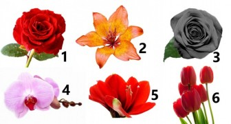 Look at the picture and choose the flower that attracts you the most: The answer may reveal something about your personality