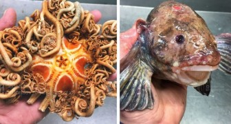 Ein russischer Fischer zeigt die seltsamsten Fische in den Tiefen des Ozeans: Hier sind die neuesten Fotos, die er veröffentlicht hat.