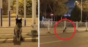 O seu dono morreu: o cachorro ficou esperando por ele na rua por 83 dias
