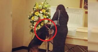 Der Hund wird zur Beerdigung seines Herrchens gebracht und nähert sich, um ihm die letzte Ehre zu erweisen