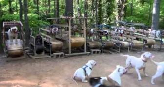 Anche i cani corrono sul tapis roulant