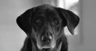 Perder un animal domestico es un dolor enorme y va respetado: quien no lo ha vivido no puede entenderlo