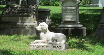 In New York mogen huisdieren vlakbij hun baasjes begraven worden op begraafplaatsen