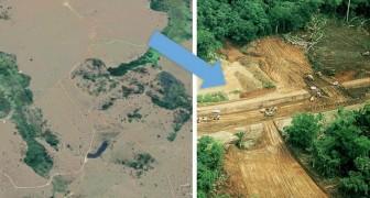 Amazonas, 2018 Rekordwaldabbau: Milliarden von Bäumen wurden in 7 Monaten gefällt