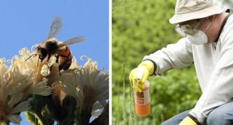 Une nouvelle étude confirme que le glyphosate contribue à l'extinction des abeilles
