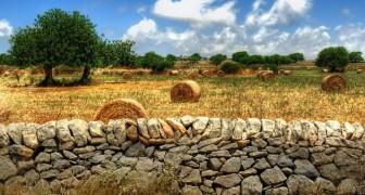 L'arte dei muretti a secco: da oggi sono patrimonio Unesco dell'umanità