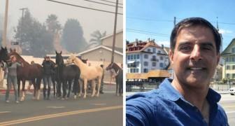 Un noto stuntman di Hollywood ha rischiato la vita per salvare centinaia di cavalli dagli incendi della California