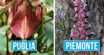 Un gruppo di botanici ha eletto le 20 specie di piante simbolo di ogni regione italiana