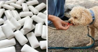 Uccisa dallo xilitolo: la vicenda di questa cagnolina ci avverte sulla pericolosità di questo comune ingrediente