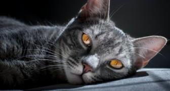 La magie des chats : une énergie qui enveloppe et protège même leurs maîtres