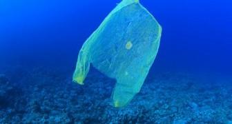 Australië heeft het gebruik van plastic zakken in slechts 3 maanden verminderd met 80%, en niet dankzij de overheid