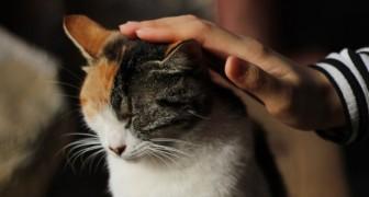 Qu'est-ce que la chat-thérapie et quels sont ses bienfaits sur notre santé physique et mentale