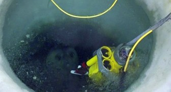 Onderzoekers slagen erin opnames te maken onder het ijs van Antarctica en de beelden zijn echt prachtig om te zien