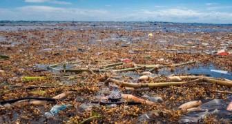 Scoperto ai Caraibi un nuovo mare di plastica che sta soffocando la fauna selvatica