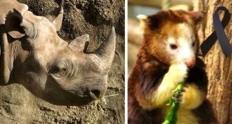 Unkontrolliertes Aussterben: alle Arten, von denen wir uns seit 2000 bis heute verabschiedet haben