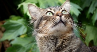 La science le confirme : les chiens et les chats peuvent voir des fréquences invisibles pour nous