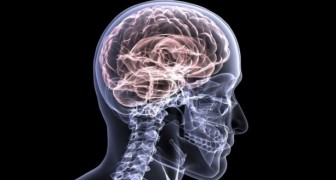 La thérapie pour inverser les symptômes de la maladie d'Alzheimer passe de l'expérimentation animale à celle humaine